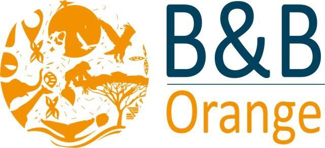 B&B Orange